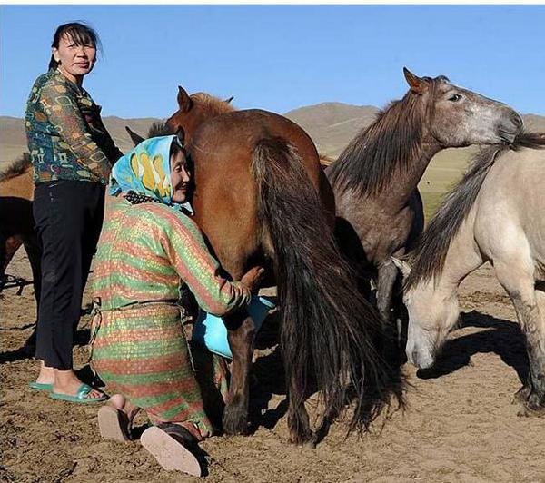 Lait de jument mongolie